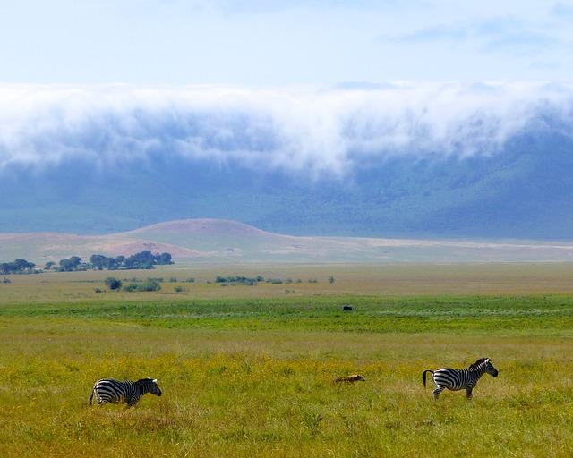 zebry u sopky