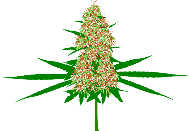 kresba marihuany i s květem